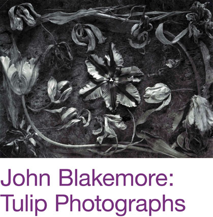 John Blakemore: Tulip Photographs